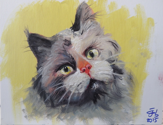 Retrato de gato / Kitten's portrait